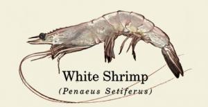 Baton Rouge Shrimp Company